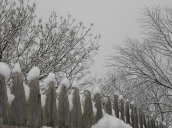 Picture, snow, trees, winter, fence, gray, sky, ice